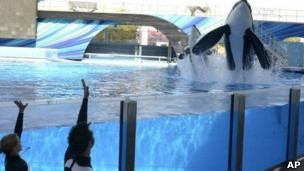 Las orcas de la demanda viven en los parques acuáticos SeaWorld de San Diego y Florida.