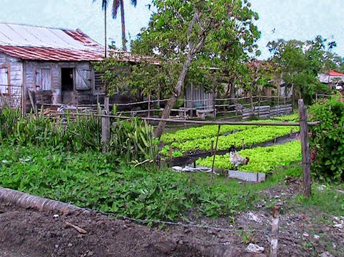 Huerta común en Contramaestre, Santiago de Cuba, de familias afectadas por huracán Sandy