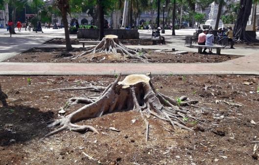 árboles talados en el Parque Central